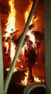 Palme incendiate 2